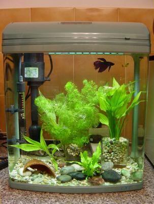 My Betta Fish Tank betta fish problems